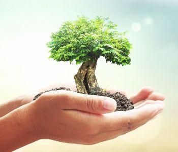 Responsabilidade Civil por danos ambientais: A tentativa de se preservar a vida em nosso planeta