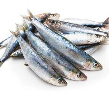 TRF- 4 mantém a multa à rede de supermercados que vendeu sardinhas durante defeso