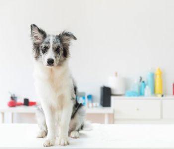 Permissão de visitação de animais de estimação em hospitais é tema de audiência pública