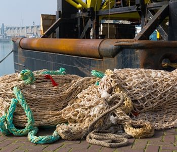 Tribunal Regional Federal da 4ª Região condena homem por pesca ilegal de camarão
