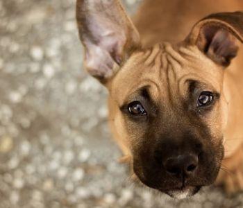 Mulher que invadiu casa para salvar cachorro é absolvida em decisão por maioria