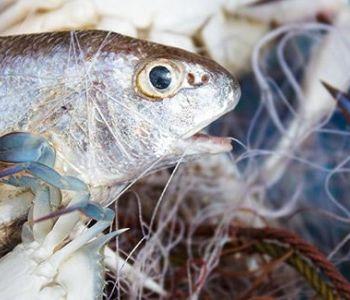 TRF4 mantém condenação de pescador que descumpriu lei ambiental